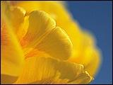 微距下的花香 2 - [wall001.com]_focus_micro_flower_02.jpg